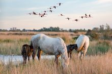 scene-of-the-camargue-6-2493873 640